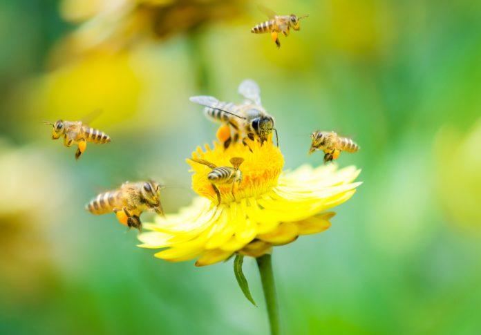 bijen bij een bloem