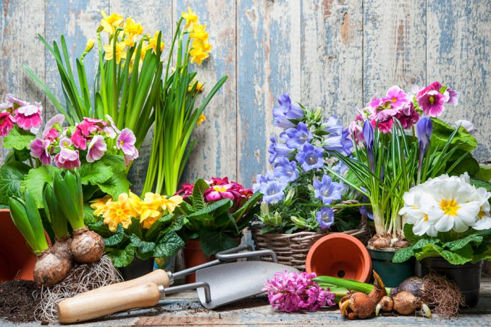 bloembollen wanneer planten